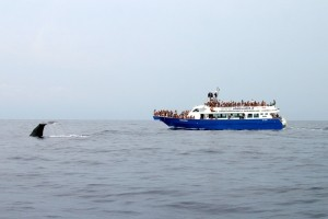 CrocierAcquario, crociere per l'avvistamento dei cetacei