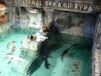L'acquario del parco divertimenti Minitalia Leolandia
