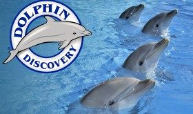 Logo DolphinDiscovery - Zoomarine