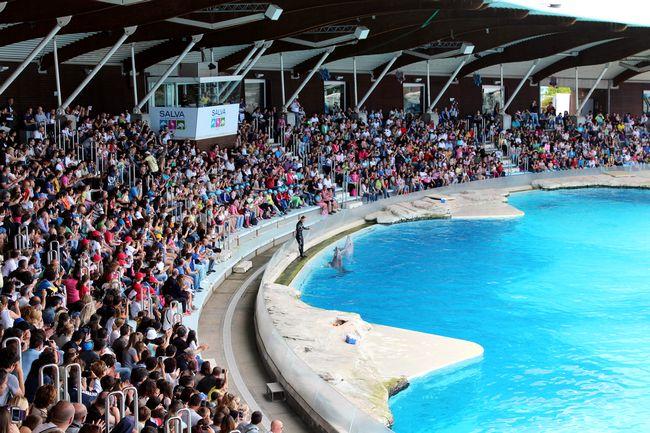 Delfini al parco Oltremare di Riccione