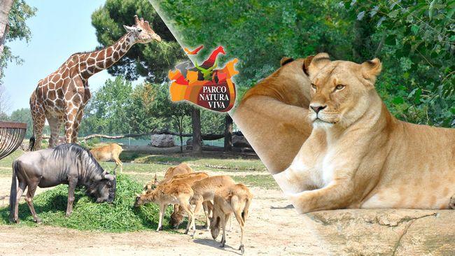 Parco Natura Viva, zoo safari di Bussolengo