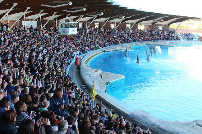 laguna delfini del parco Oltremare di Riccione