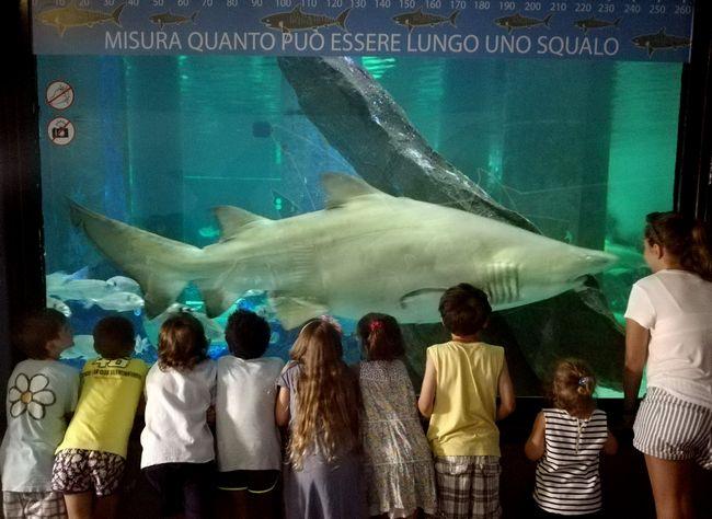 Vasca degli squali all'Acquario di Cattolica