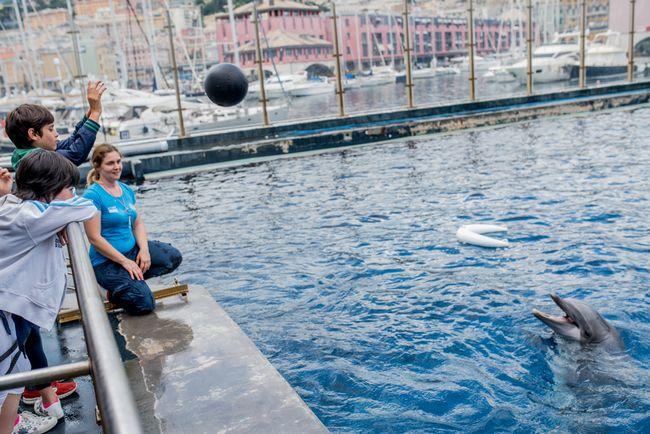 Visita guidata a bordo vasca dei delfini all'Acquario di Genova
