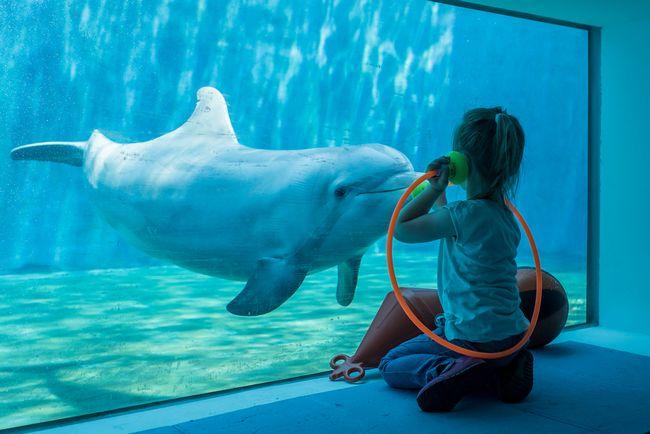 Esperienza con i delfini all'Acquario di Genova