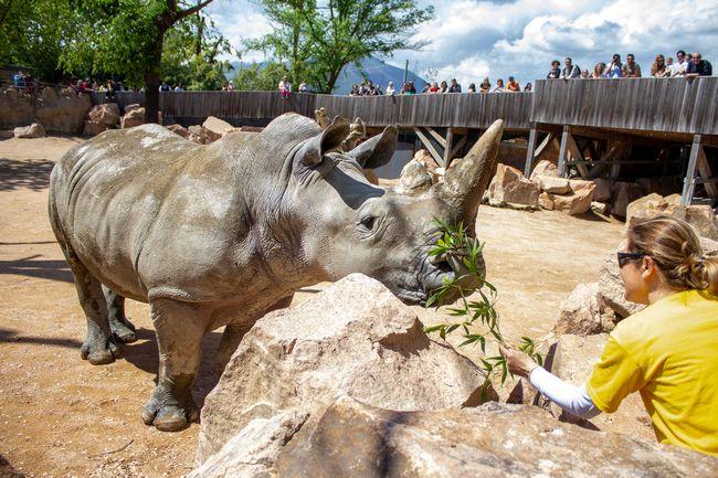 Rinoceronte allo zoo di cumiana Zoom Torino