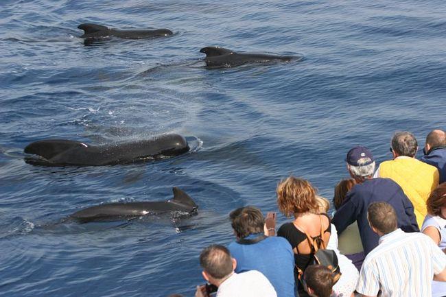 CrocierAcquario: la crociera per vedere i cetacei del Mar Ligure