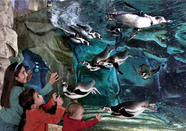 Bambini davanti alla vasca dei pinguini all'Acquario di Cattolica