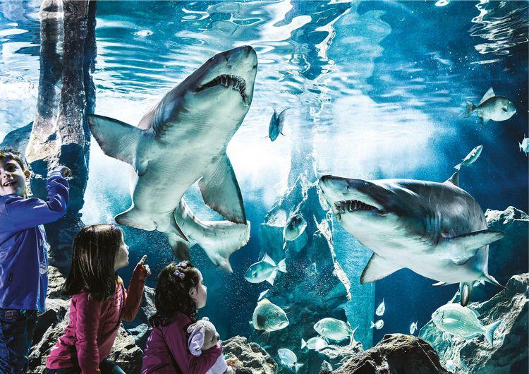Bambini davanti alla vasca degli squali dell'Acquario Le Navi di Cattolica