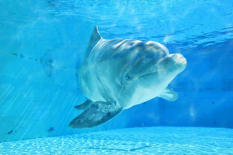 Delfino femmina del parco Oltremare di Riccione