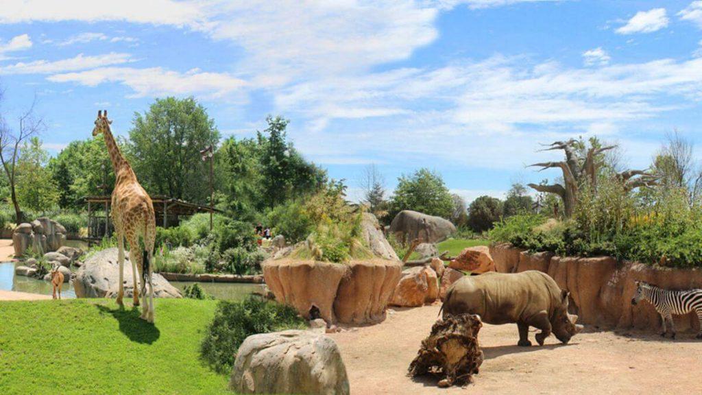 Animali africani nell'area Serengheti del Bioparco Zoom Torino