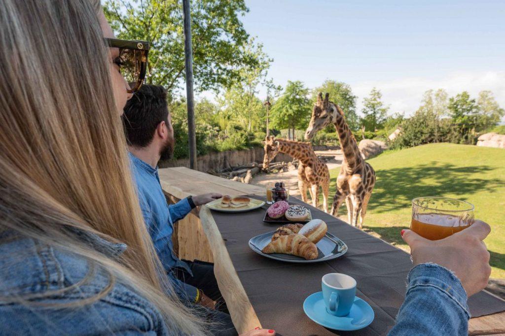 Persone fanno colazione ammirando le giraffe al nuovo Glamping Africa Resort del Bioparco Zoom Torino a Cumiana